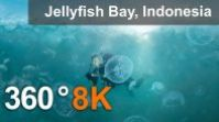 360 video, Jellyfish Bay, Raja Ampat, Indonesia, 8K underwater video