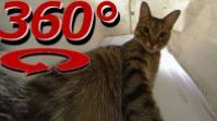 360 Degree Cat Video – The Cat's In the Bag – Full Version
