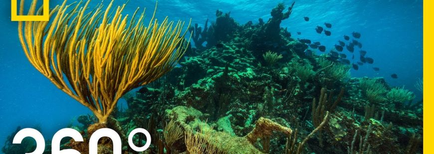 360° Underwater National Park   National Geographic